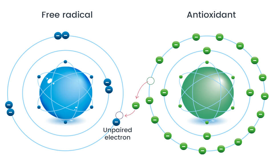 How antioxidants fight free radicals in your skin