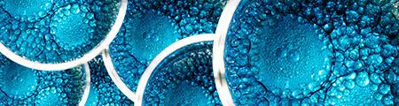 Plankton skin benefits