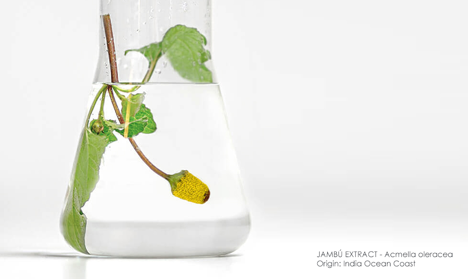 Jambú Extract - active ingredient for wrinkle smoothing