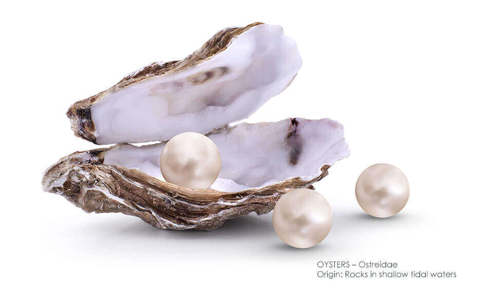 Active Ingredient Oyster