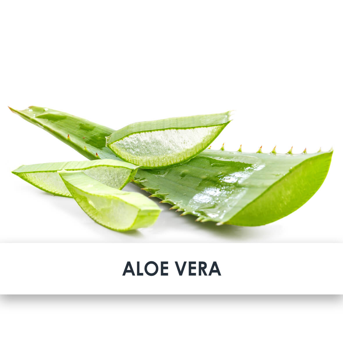 Active Ingredient Aloe Vera