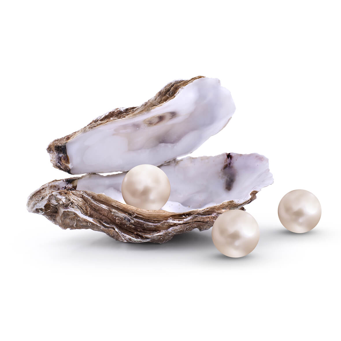Oysters – for a matte complexion, healthy cell protection & beautiful supple skin