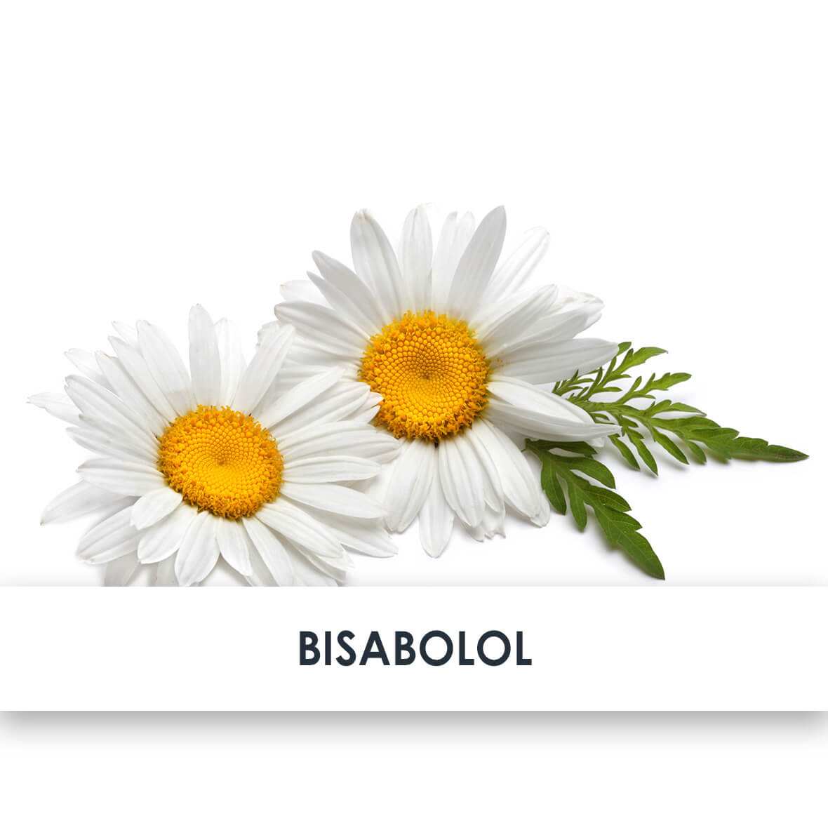 Active Ingredient Bisabolol