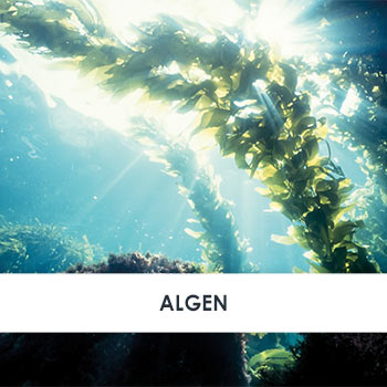 Wirkstoff Algen