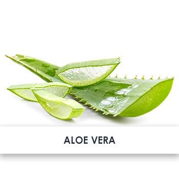 Active Ingredient Aloe Vera
