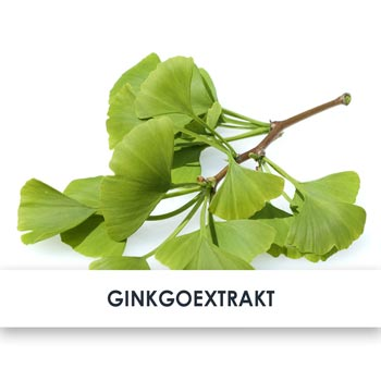 Wirkstoff Ginkgo