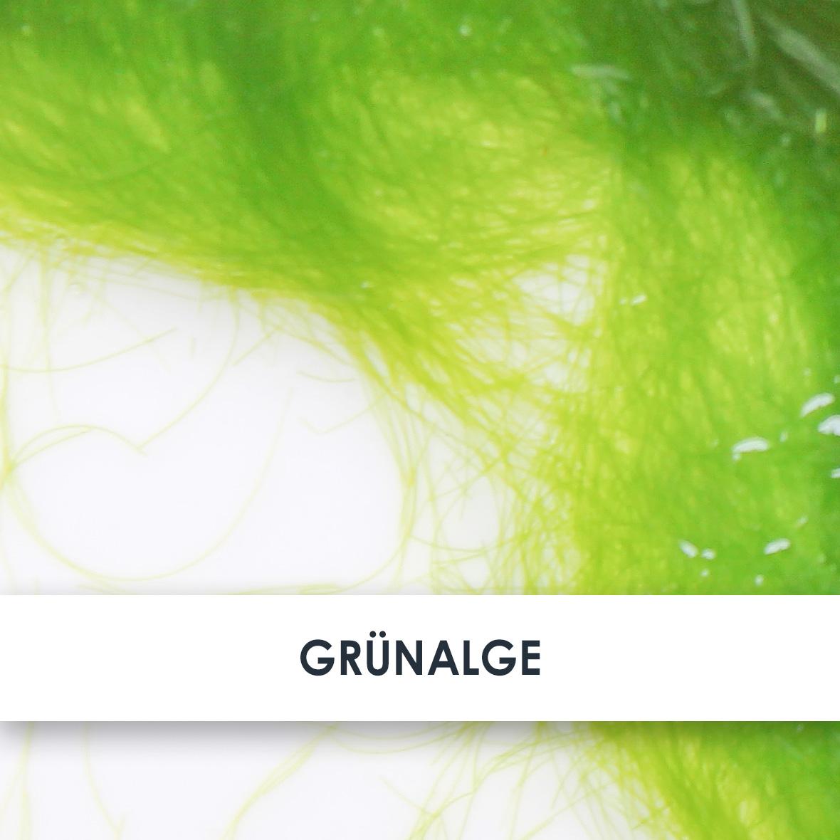 Wirkstoff Grünalge