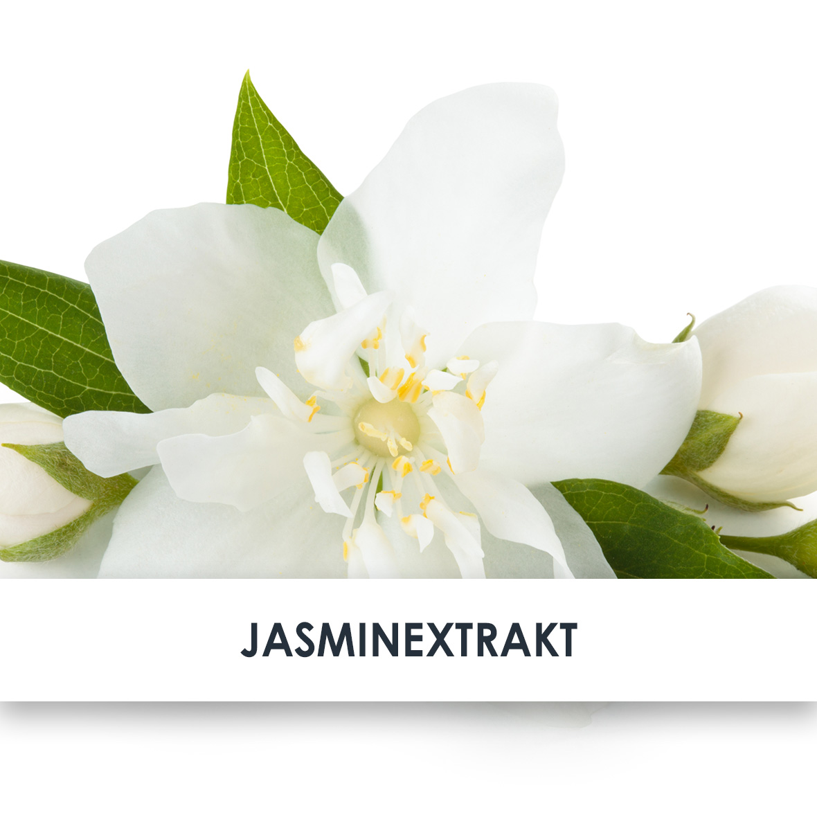 Wirkstoff Jasmin