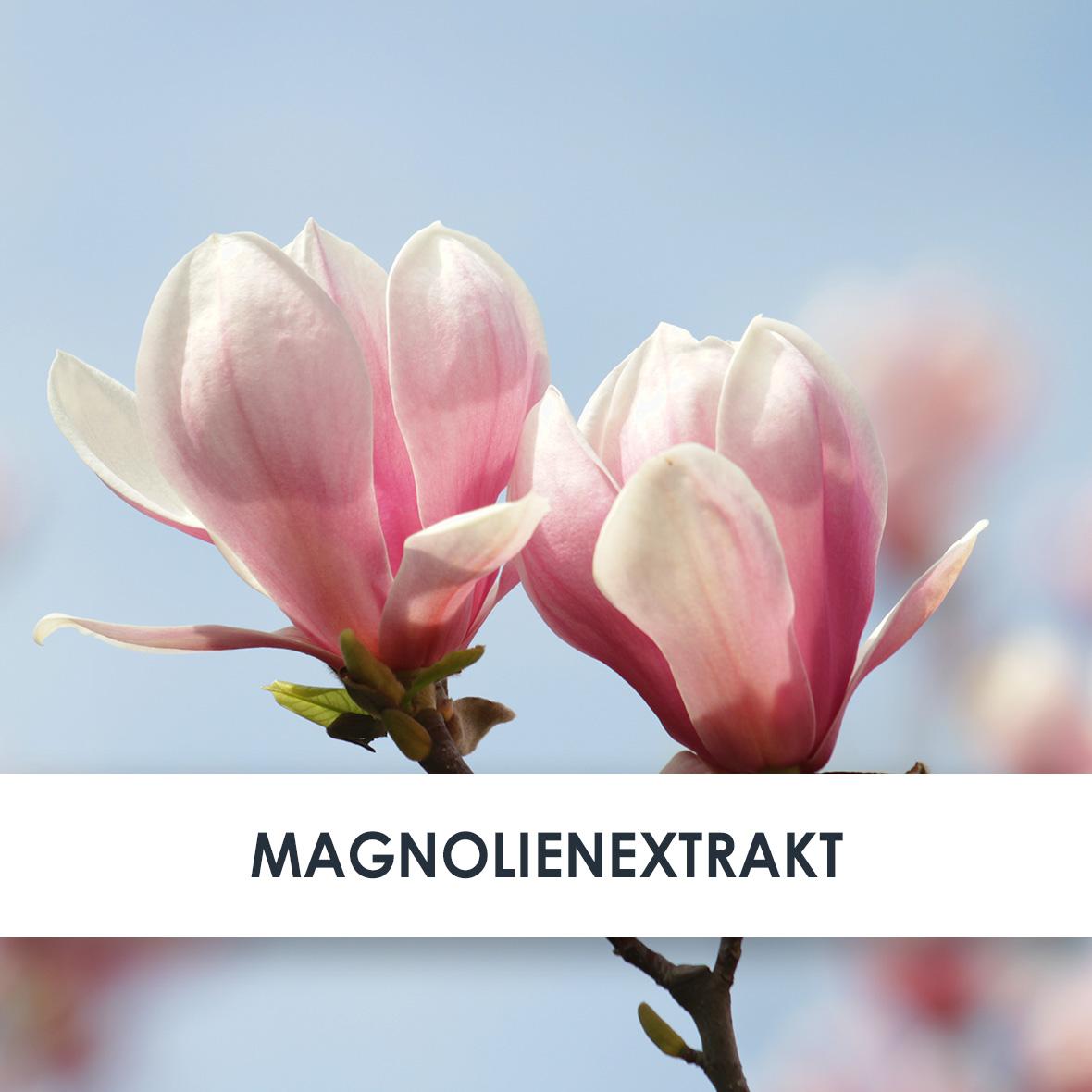 Wirkstoff Magnolien-Extrakt
