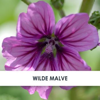 Wirkstoff Wilde Malve