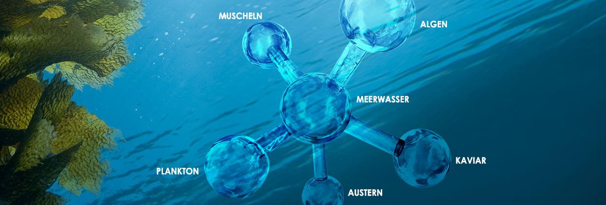 Anti-Aging Komplex aus 6 maritimen Wirkstoffen zur Versorgung und zum Schutz der Haut