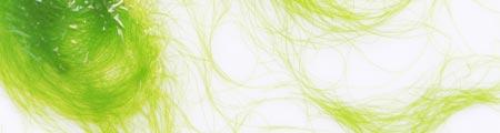 Wirkung und Merkmale Algen