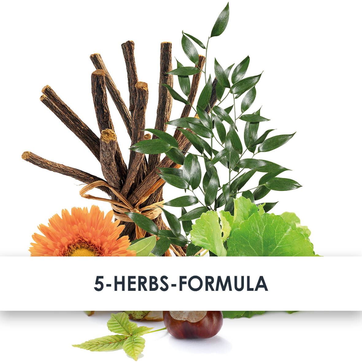 5-Herbs-Formula Active Ingredients