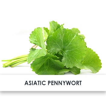 Active Ingredient Asiatic Pennywort
