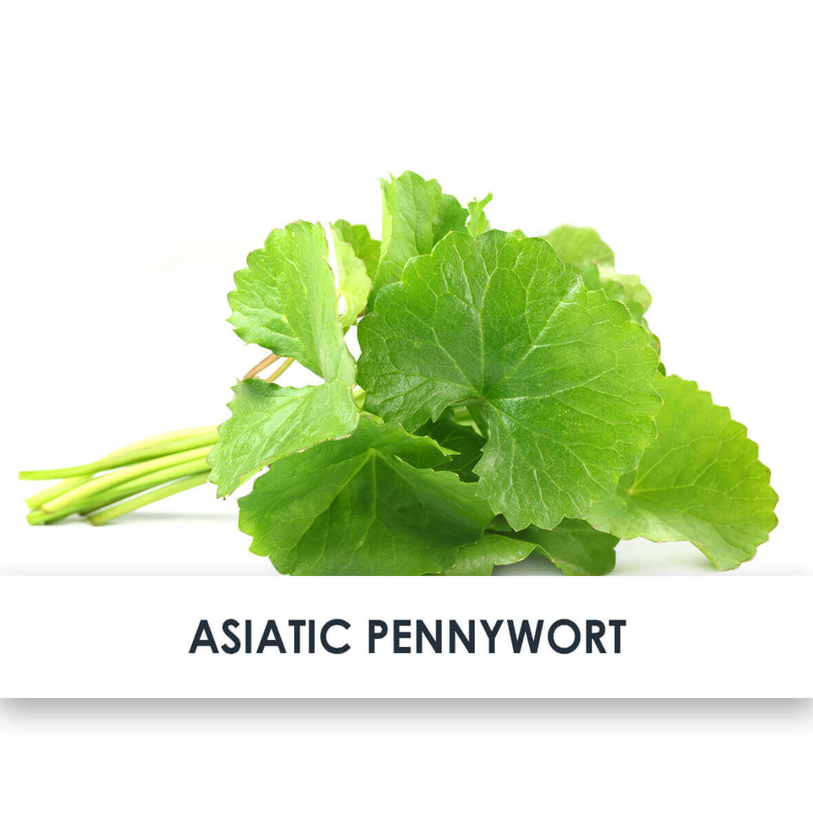 Active Ingredient Asiatic Pennywort