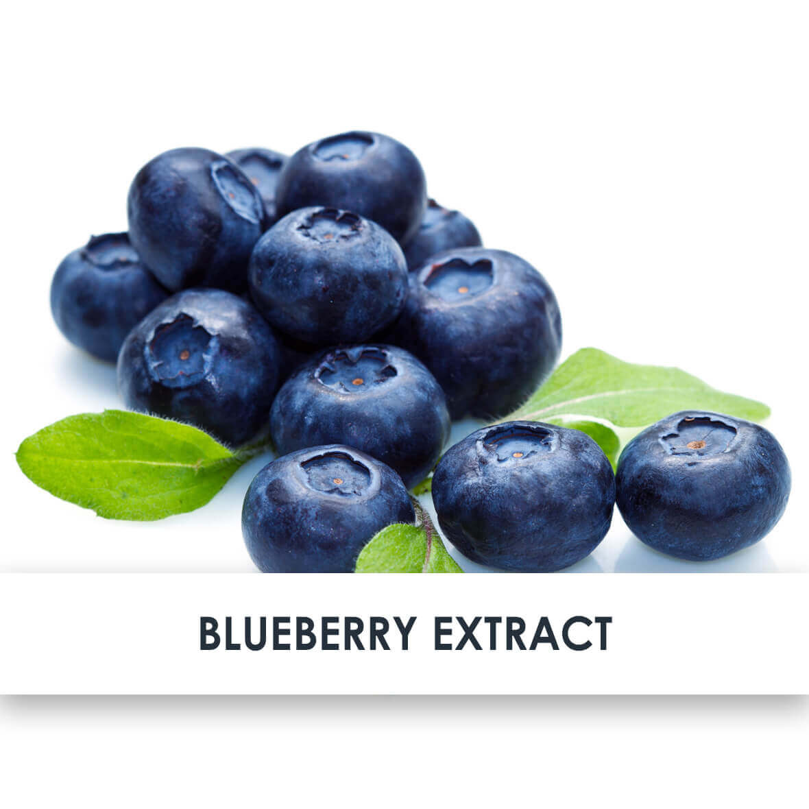 Blueberry Extract Skincare Benefits