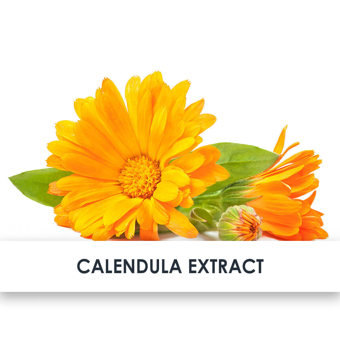 Calendula Extract Skincare Benefits