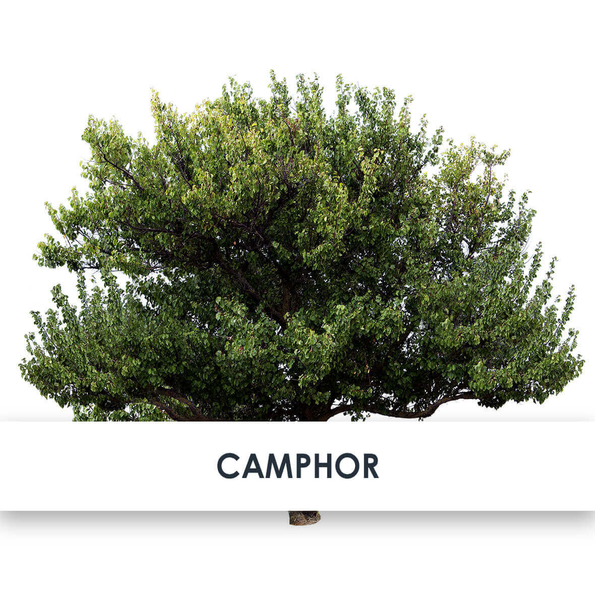 Camphor Skincare Benefits