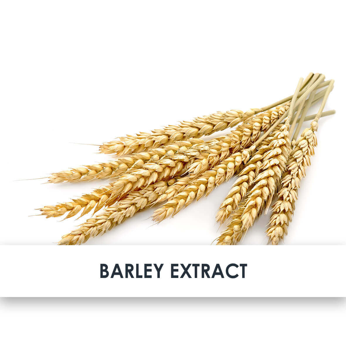 Active Ingredient Barley Extract