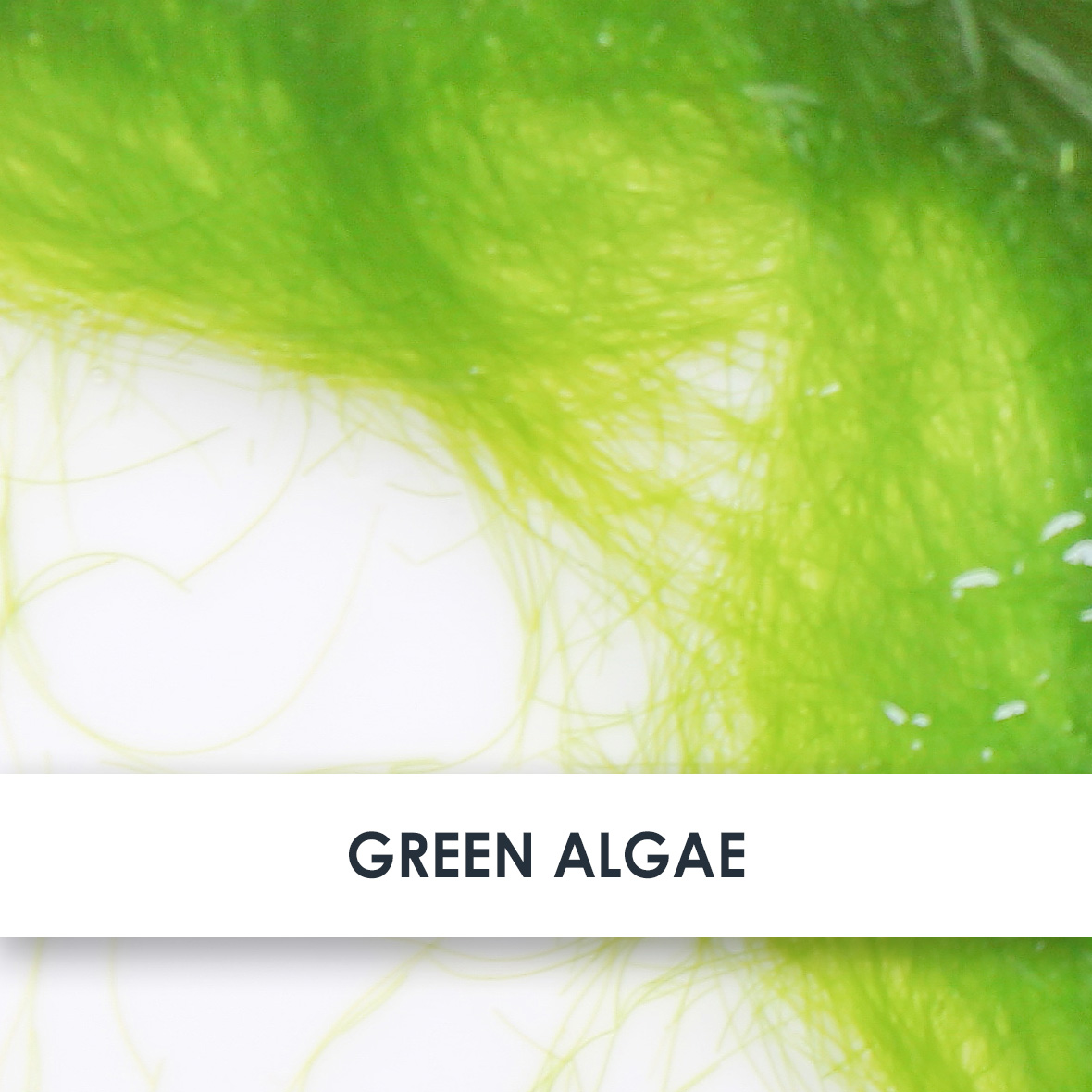 Green Algae Skincare Benefits