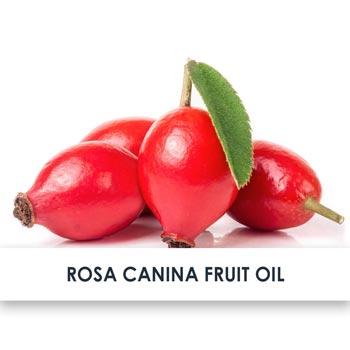 Rosa Canina Fruit Oil Skincare Benefits
