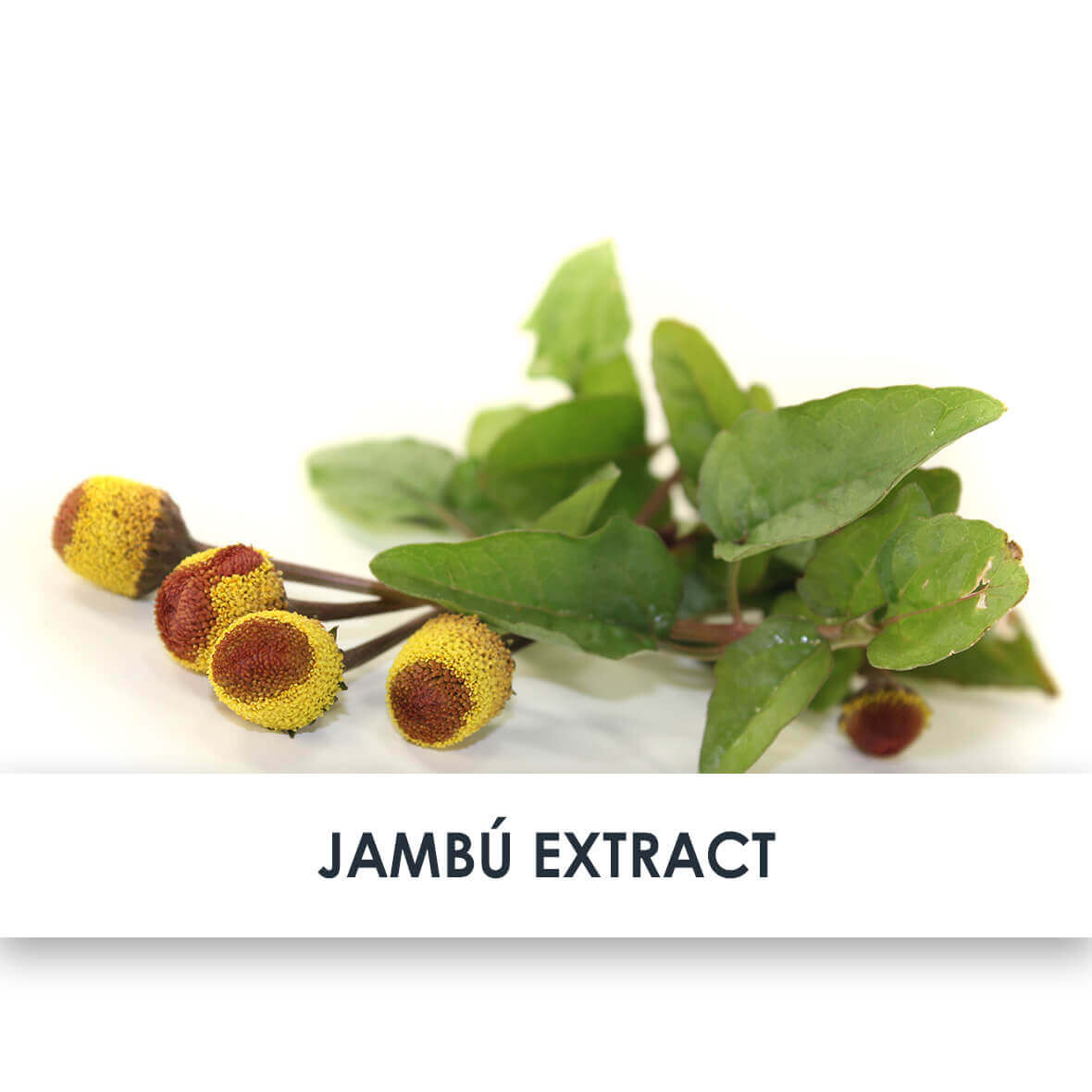 Jambú Extract Skincare Benefits