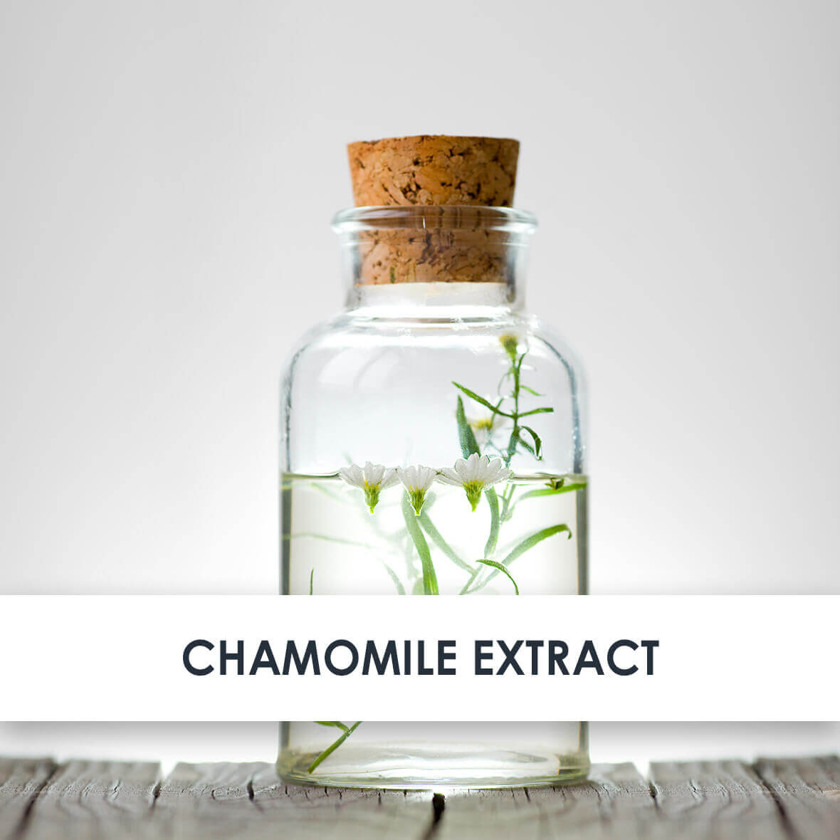 Chamomile Extract Skincare Benefits