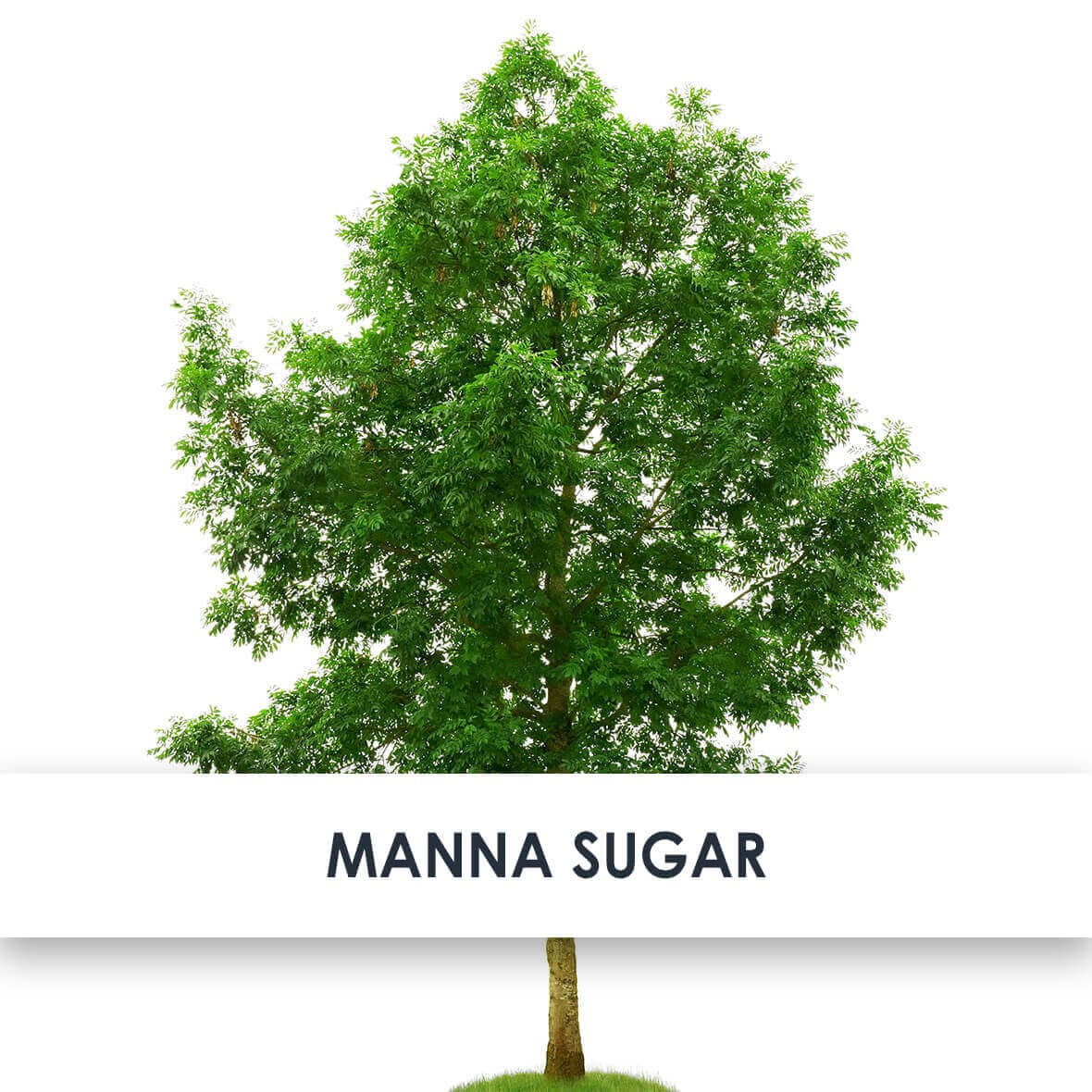 Manna Sugar Skincare Benefits