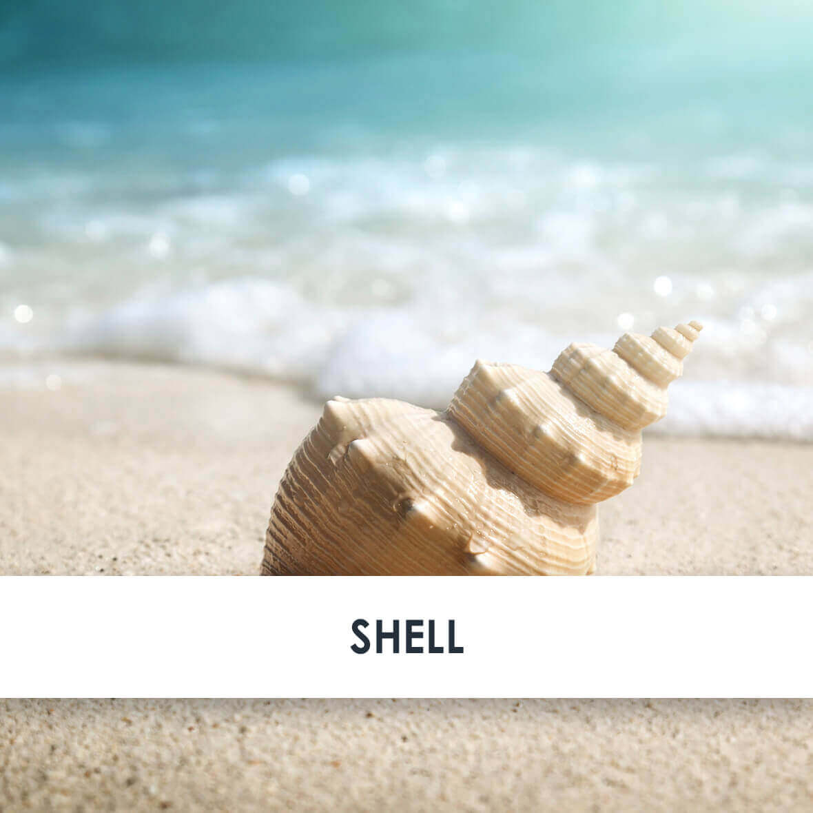 Shell Skincare Benefits
