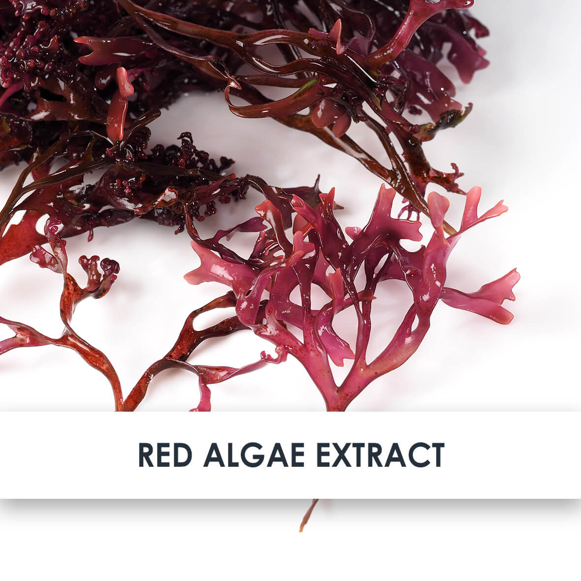 Red Algae Extract Skincare Benefits