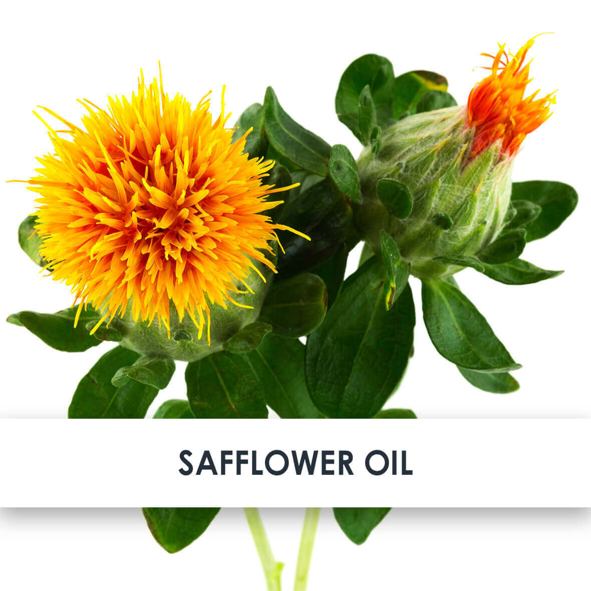 Safflower Oil Skincare Benefits