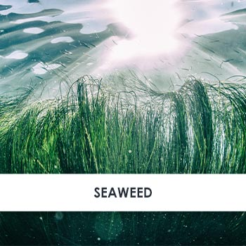 Seaweed Skincare Benefits