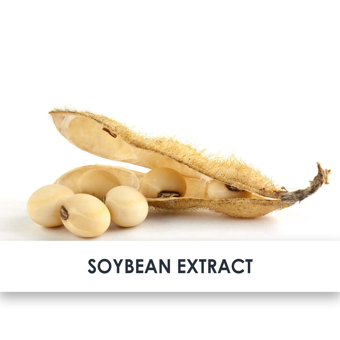 Soybean Skincare Benefits