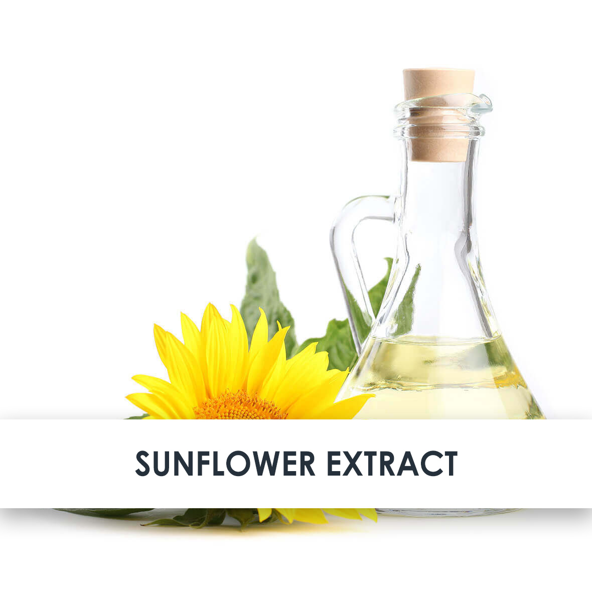 Sunflower Extract Skincare Benefits