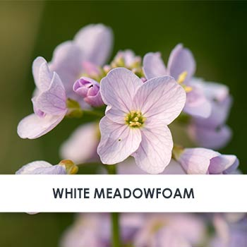 Meadowfoam Seed Oil Skincare Benefits
