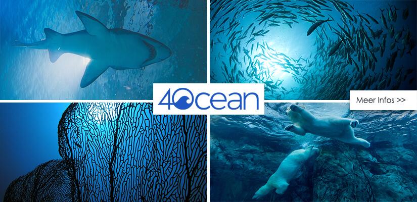 Armbänder für den guten Zweck und gegen die Verschmutzung der Meere