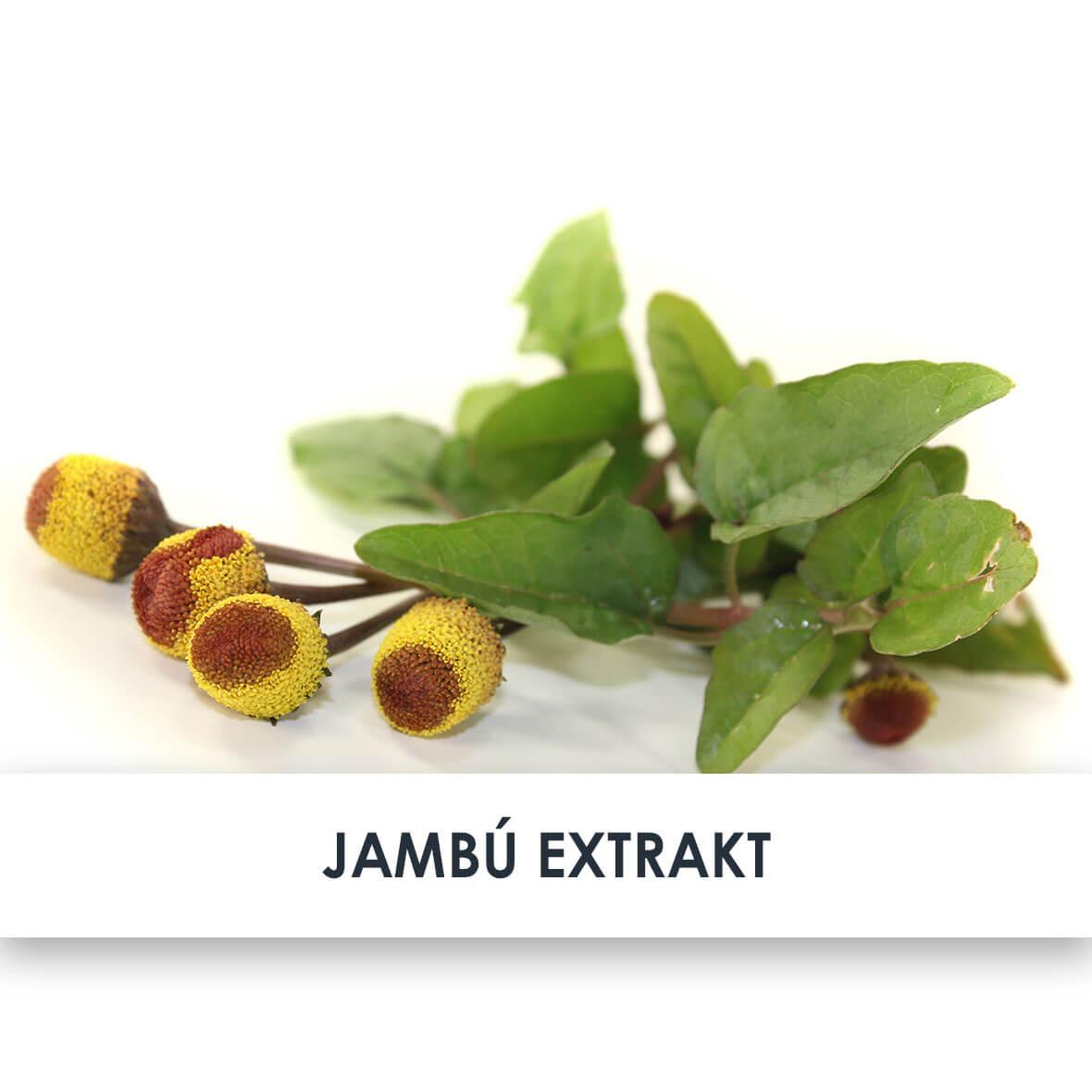 Wirkstoff Jambu Extrakt