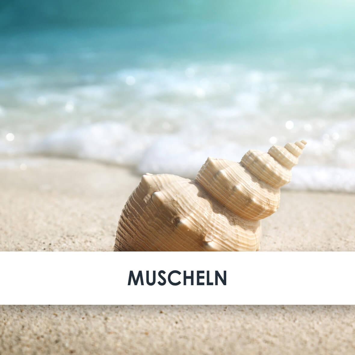 Wirkstoff Muscheln