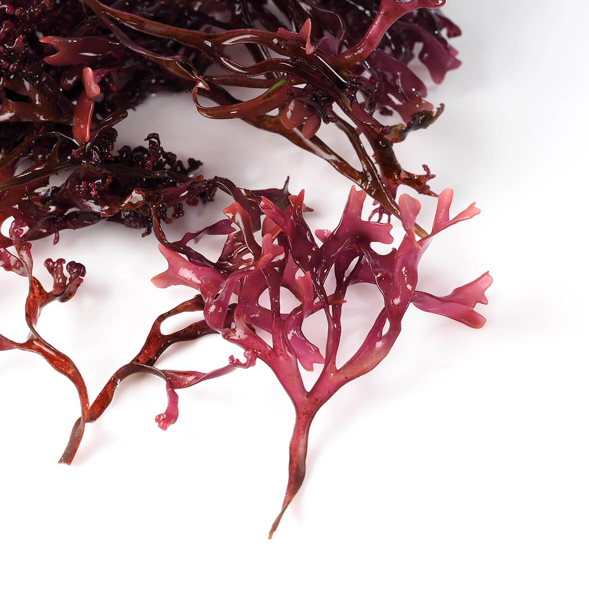 Red algae extract has a firming effect