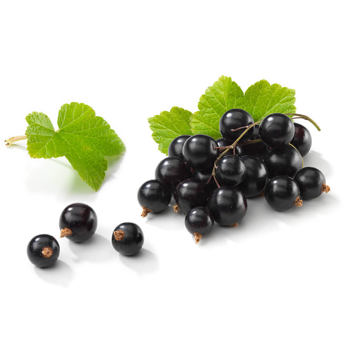 Blackcurrant – ideal ingredient for sensitive, stressed & damaged skin