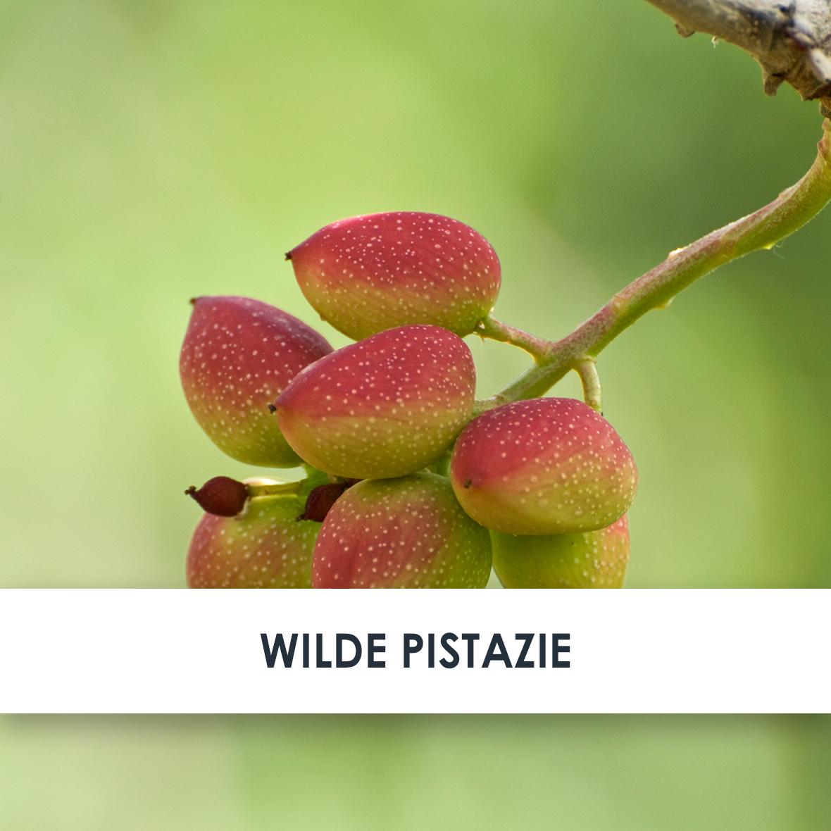 Wirkstoff Wilde Pistazie
